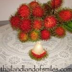 The Ngoh Rong Rian variety of Rambutan