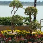 Nakom Phanome River walk on the mekong4