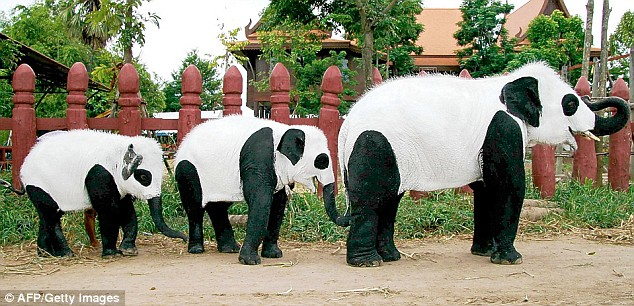 "Panda Elephant""s at the Ayutthaya-Elephant Kraal"